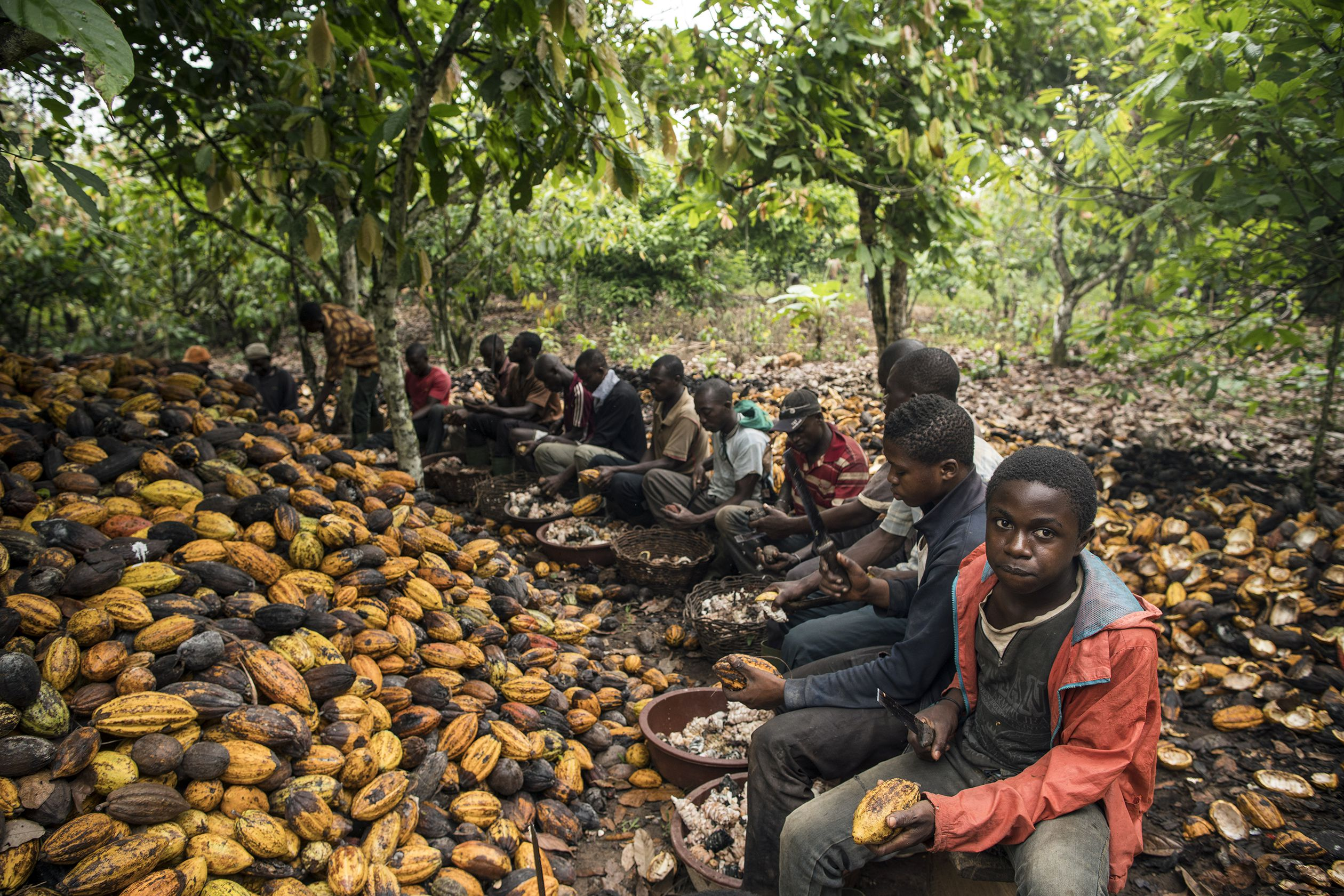 Cocoa farm in Cote D'Ivoire | Photo © Benjamin Lowy